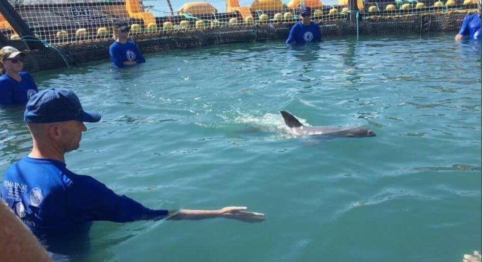 Miembros de club de pesca de Puerto Peñasco fueron quienes avistaron a la vaquita marina