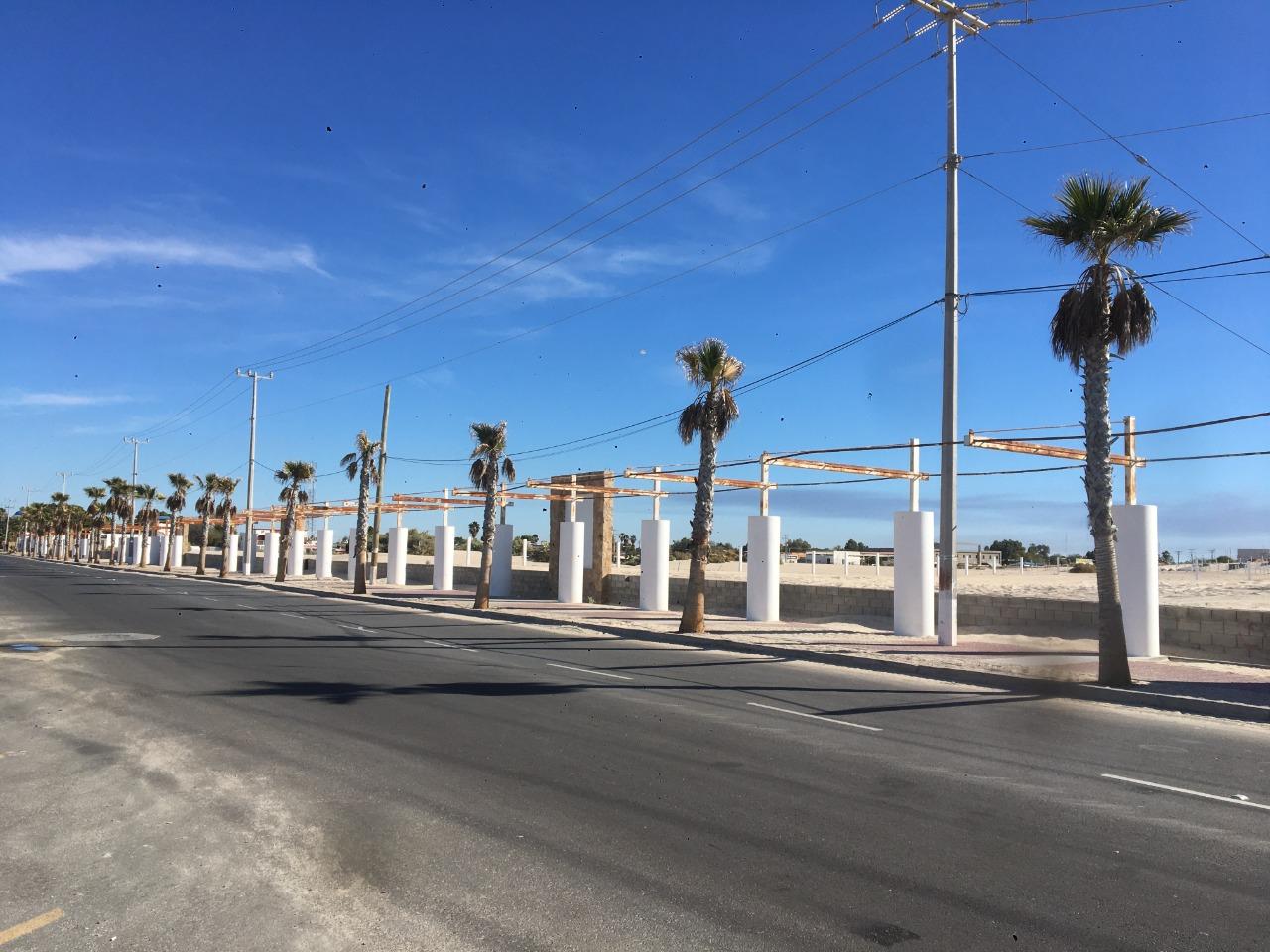 Se están  secando las PALMAS  de la entrada de playa hermosa por falta de AGUA